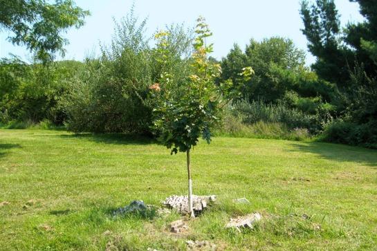 Plant Home Tree